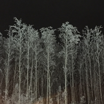 Frost on the trees