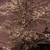 Winter tree!:)