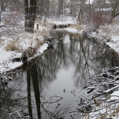 Bunn's Creek in early December.