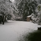 my back yard looks like a wonderland.