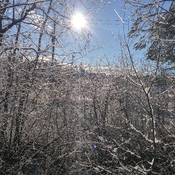 Snowshine in Coombs