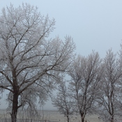 Foggy, frosty day