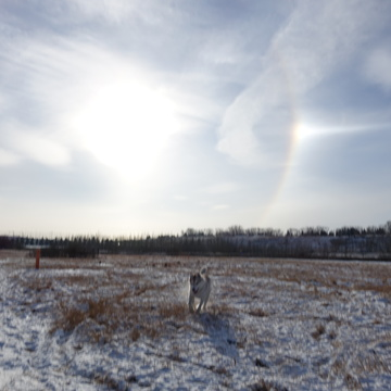 Snow dogs and Sun dogs