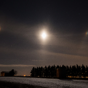 Beautiful Moon Dog in Calgary area