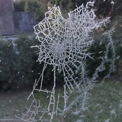Jack Frost Weaves His Winter Web