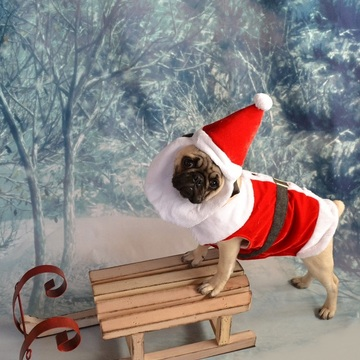 Santa Pug Getting Ready For Christmas