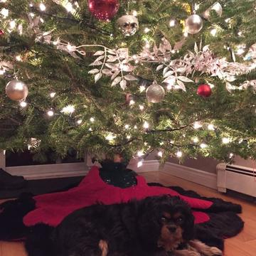 Yoshi under the tree