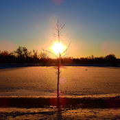 FROZEN LAKE SINGLE TREE