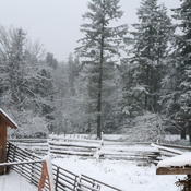 snowy day in westholme bc