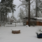 The first snow! Our yard in North Saanich BC this morning!