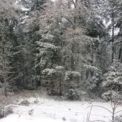 Snow at Cowichan Bay