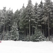 snowy morning at Westwood Plateau Golf course