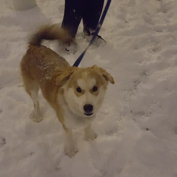 our dog spencer enjoying snow for the first time , hes 6 mths old