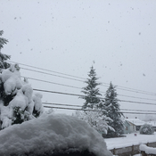 Snow is piling up fast in Port Alberni!