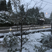 Snowfall has stopped in Abbotsford