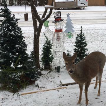 Deer in Christmas Decorations