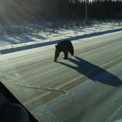 Black bear out in the middle of January