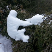 Frozen Tree Hugger