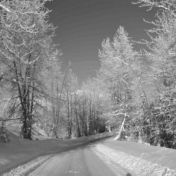 Snowy road in black & white