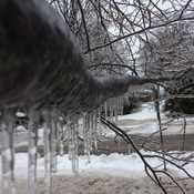 Iced over tree branch.