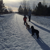 Dog walking in Saskatoon