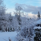 Picture Postcard New Years Day Maple Ridge