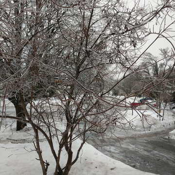 ice on tree and street is very icy and slepery