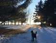 Doux hiver pour les chiens aussi