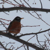 robin at the marina