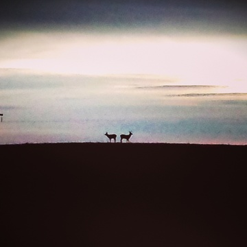 Wildlife on the early morning horizon