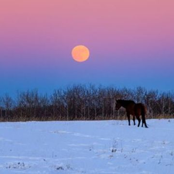 Beautiful Prairie Moonrise