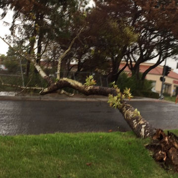 Trees down in Oceanside