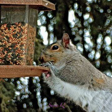 Checking out the Feeder