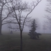 Foggy day in Chippewa park