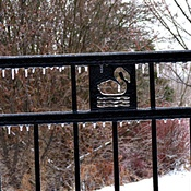 Ice Covered Swan Lake Fence