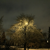 Street light through ice covered tree