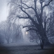 A Foggy Walk Through The Park
