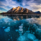 Frozen bubble fun on Abraham Lake