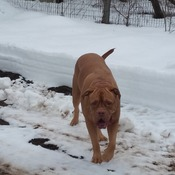 Roxi and the January thaw.