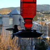 Winter Feeder