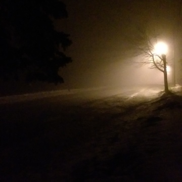 Foggy Night Walk