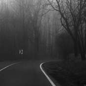 Road through the foggy woods