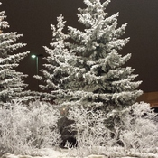 Hoar Frost Covered Trees!