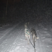 Mushing in the dark