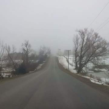 Foggy countryside on the drive home to TO