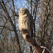 owl at hoople creek