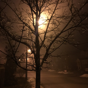 Another foggy evening