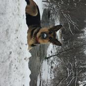 tyson in the snow