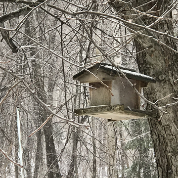 Freezing rain on the bird house... Verglas sur la cabane d'oiseaux...