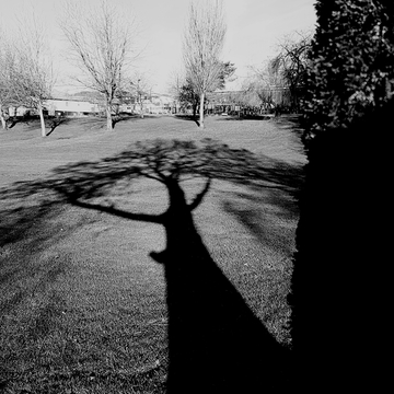 Long Shadow at Earles Park